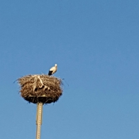 tag-5+6-storch